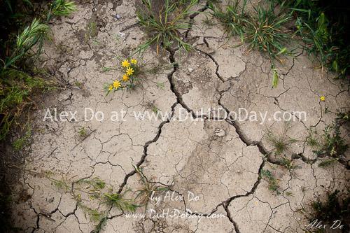 Đất cằn cỗi ở thảo nguyên Carrizo