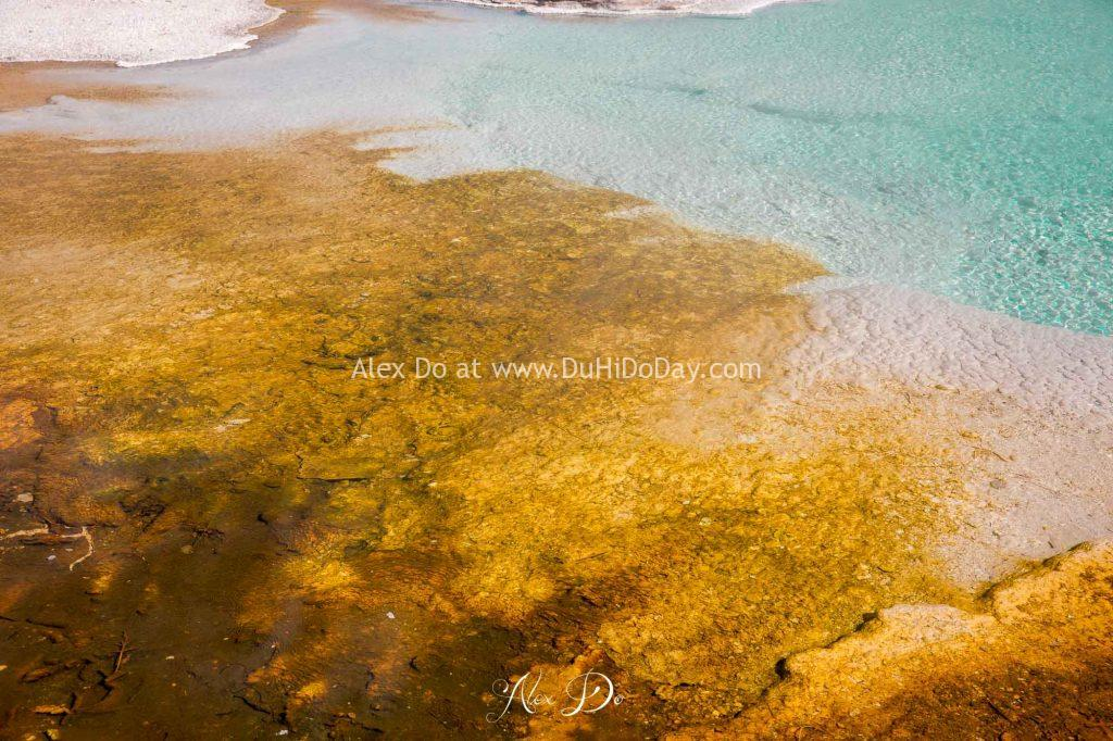Thảm vi khuẩn quanh hồ ở Yellowstone