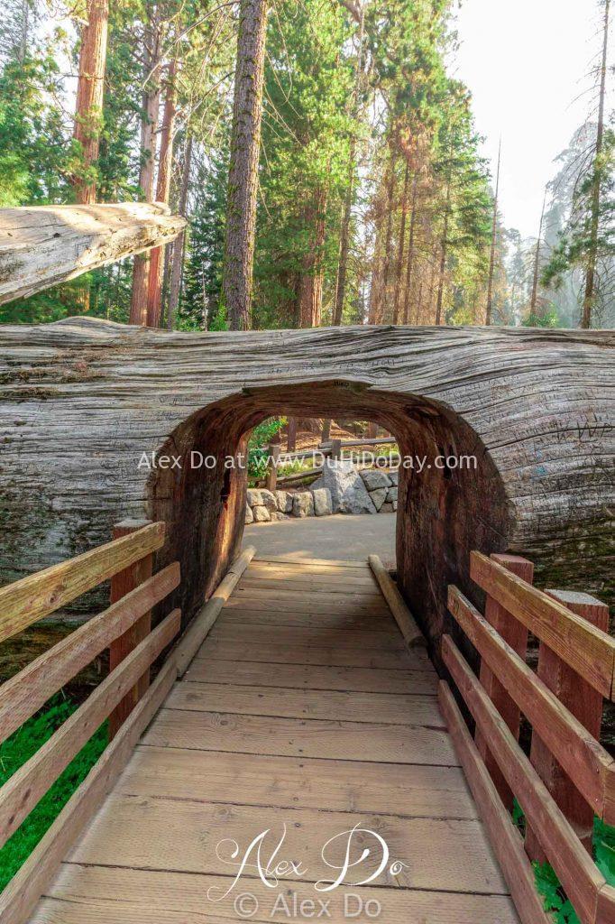 Đường hầm đi qua một thân cây đổ