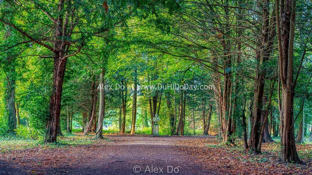 Rừng Chantilly trong chiều thu đẹp